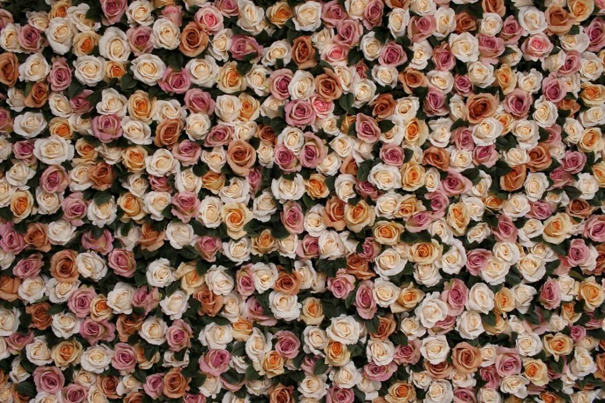 cvetni zid svilene ruze